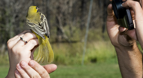 Public Bird Banding Days Set at Chadron State Park, Wildcat Hills