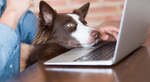 Apply These 7 Tips When Adopting Best Practices for Take Your Dog to Work Day