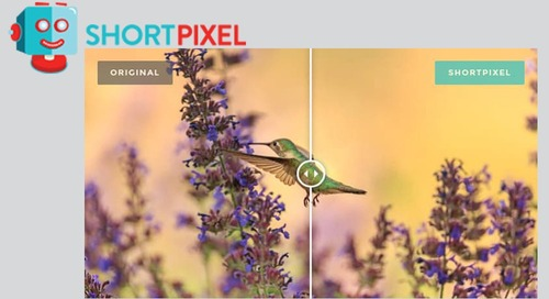 ShortPixel Image Optimizer Can Speed Up Your Business Site