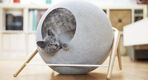 How This Cat Entrepreneur Used Scientific Thinking to Improve His Products