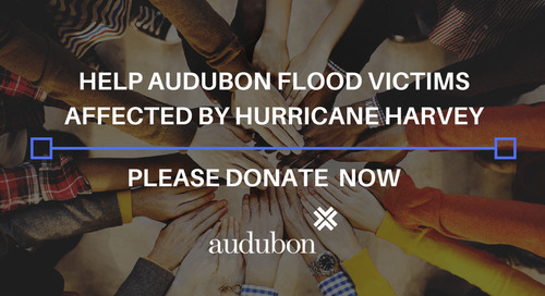 HELP AUDUBON FLOOD VICTIMS AFFECTED BY HURRICANE HARVEY