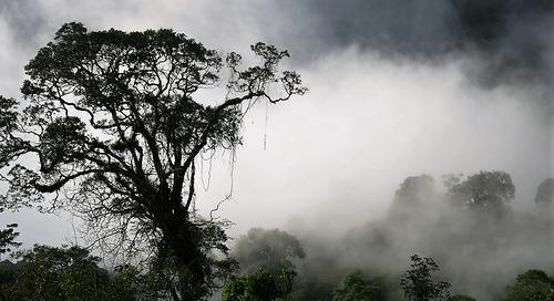 Pesona Taman Nasional Kayan Mentarang