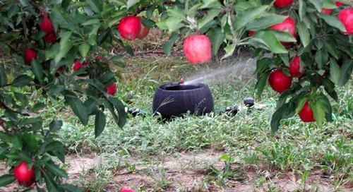 K-Line Orchard: New Irrigation Solutions for Horticulture