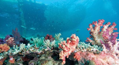 Biota-biota Laut Favorit yang Bisa Anda Jumpai Saat Diving di Raja Ampat