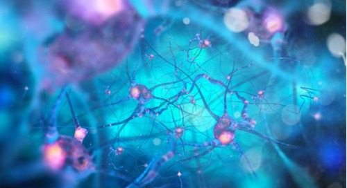 A post-graduate certificate in neuroscience and online learning