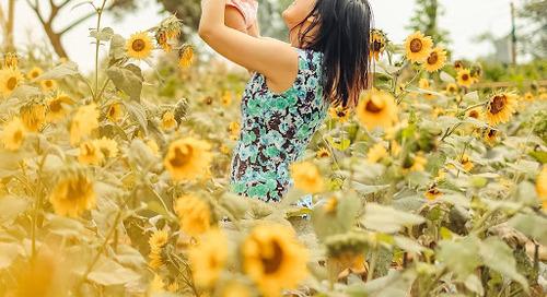 Arumdalu Farm ~ Taman Bunga Matahari Cantik di Gading Serpong