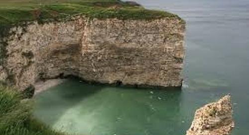 Returning Birds to Bempton Cliffs