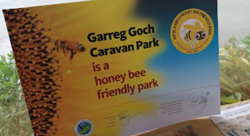 GARREG GOCH IS THE BEES KNEES