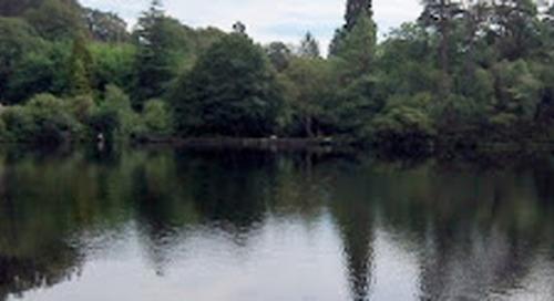 Woodland Walks in North Wales