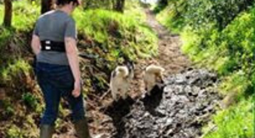 Try something new on your holiday with us - Husky Trekking in North Yorkshire!!