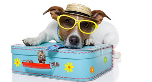 Dog Friendly things to do on your hols......
