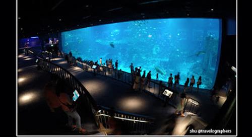 20 Tips dan Panduan Liburan ke SEA Aquarium di Resort World Sentosa Singapura
