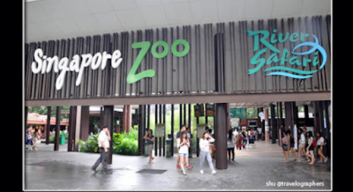 30 Tips dan Panduan Lengkap Liburan ke Singapore Zoo, River Safari, Night Safari dan Jurong Bird Park di Singapura