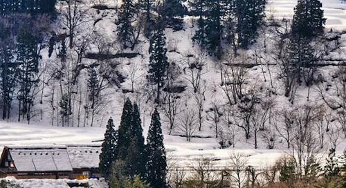 Shirikawa Go: Desa Tradisional Jepang yang Bersejarah dan Indah.