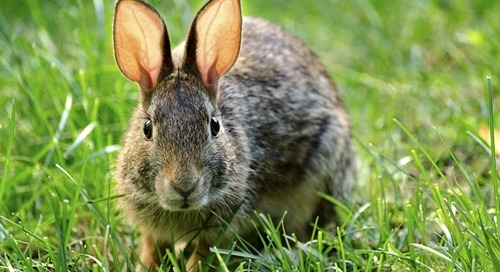 Bad Rabbit Ransomware: What We Know so Far
