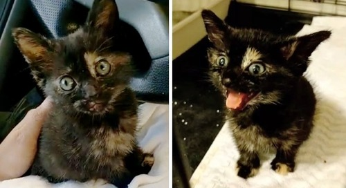 Stray Kitten Lost Her Meow Until She Found Her Rescuer
