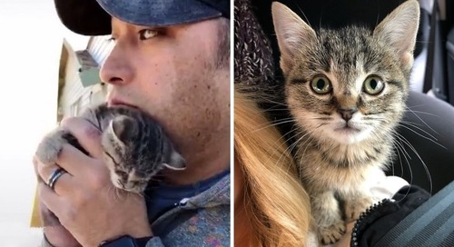 Man Saves Kitten from Junk Pile and Discovers She Stays Small and Won't Leave Shoulders