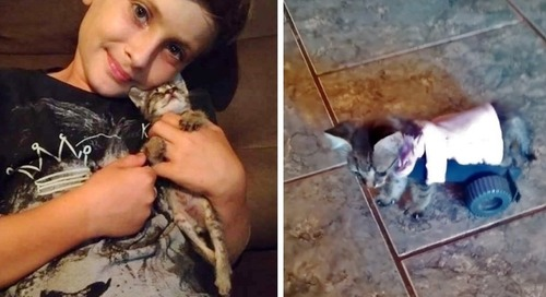 Boy Meets Tiny Kitten Who Can't Walk, and Decides to Turn Her Life Around