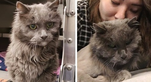 Woman Wanted a Cat that Nobody Would Adopt and Found 20-year-old Kitty Waiting for Her
