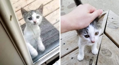 Stray Kitten Sneaks in Family's Yard for Food and Has Her Life Turned Around