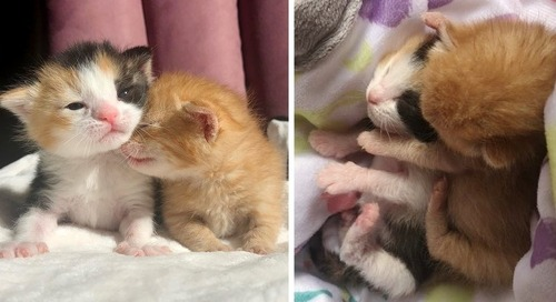 Kittens Rejected from Their Litter, Keep Each Other Comforted Until They are Rescued