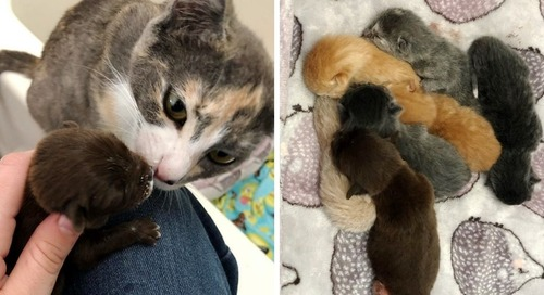 Rescued Cat Gives Orphaned Puppy a Family and Raises Him Along with Her Kittens