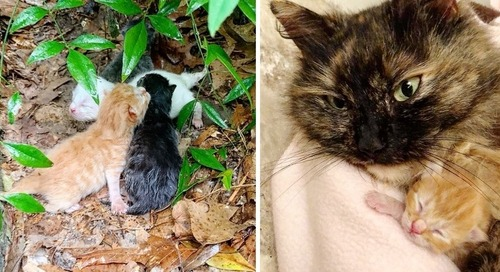 Stray Cat Shields Her Kittens from Pouring Rain Until Rescuers Arrive