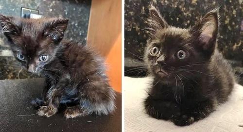 Scrawny Kitten Found on Driveway Is Determined to Grow Despite the Rough Beginning