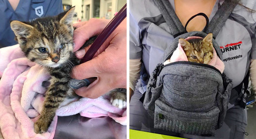 Cat Drops Off Her Kitten in Family's Yard - They Discover the Kitty Needs Their Help