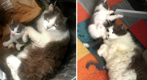 Stray Cat Found Huddled with Her Kitten in Trash Can Continues to Hover Over Her After Rescue