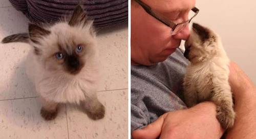 Kittens Found on Hiking Trail Climb Up to Rescuer and Can't Stop Cuddling