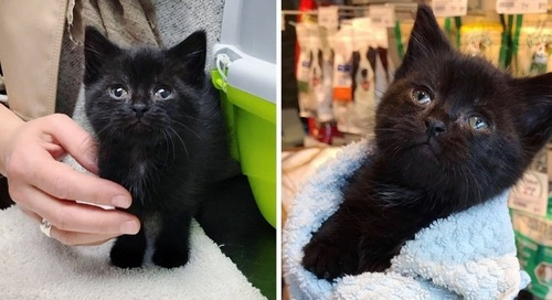 Kitten Who Was Left Behind in Garden, is So Happy to Find Help - He Can't Stop Purring