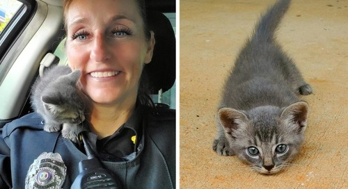 Stray Kitten Runs Across Road, Crawls Up onto Officer's Shoulder and Won't Let Go