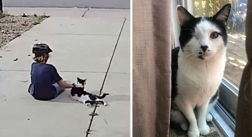 Family Discovers Their One-eyed Cat Has a Little Admirer Who Visits Him Every Day