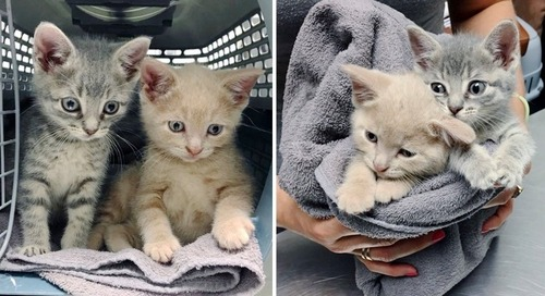 Kittens Found Wandering the Streets Together, Never Leave Each Other After They Were Rescued