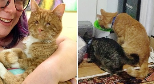 Couple Went to Shelter to Adopt a Cat But Couldn't Leave His Seeing Eye Kitten Behind
