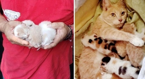Rescuers Never Gave Up Finding Cat After Saving Her Kittens from Dumpster