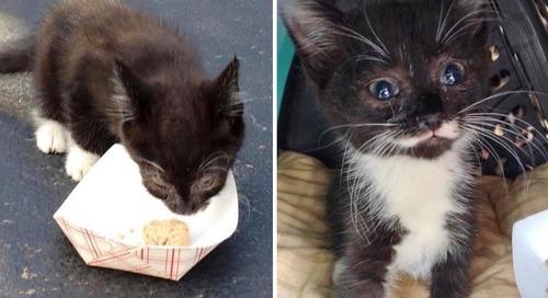 Kitten Found Hiding Under Car - Neighbor Sat With Her Until Help Arrived