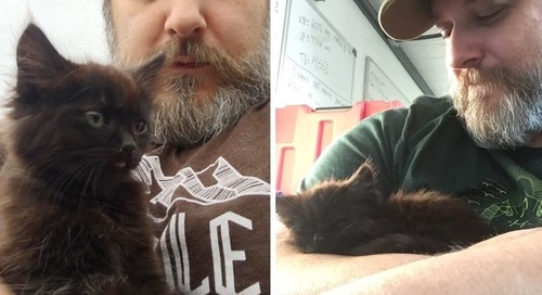 Kitten Races to Geologist, Climbs Onto His Shoulders and Won't Let Go