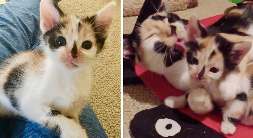 Cat Rescued from the Streets, Won't Leave Her Kitten Who Looks Just Like Her
