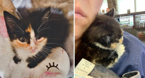 Kitten Cuddles Rescuer and Won't Let Go —  They Find Her a Friend So She Won't Feel Alone