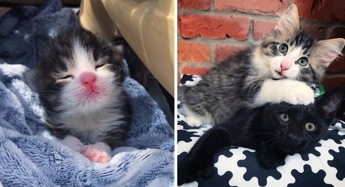 2 Kittens Rescued from the Same Fate, are So Happy When They Find Each Other