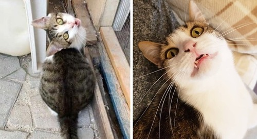 Kitten Showed Up at Hotel Then Found Someone He Loved 3 Years Later - He Didn't Want to Let Go
