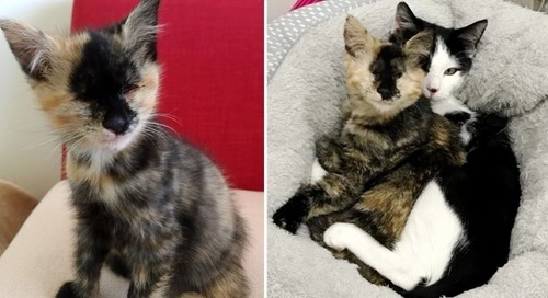 Blind Kitten Befriends Another Rescued Kitty Who Needed a Friend to Cuddle