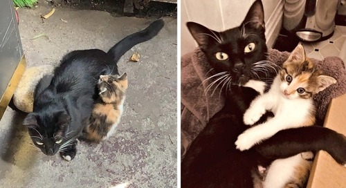 Cat Keeps Her Sole Kitten Safe Until Rescuers Arrive - They Can't Stop Cuddling