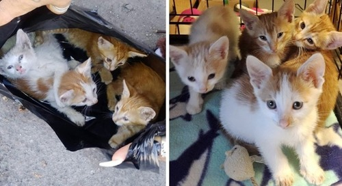 Rescuers Found Kittens in Garbage Bag and Went Back for Their Cat Mom
