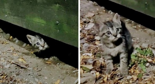 Kitten Comes Out from Under Deck When Rescuers Arrive - His Siblings Follow Suit