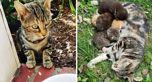 Stray Cat Comes Back to Woman Who Helped Her, and Takes Her to See Her Kittens