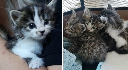 Rescuers Save Kittens from a Shed and Come Back for Cat Mom to Reunite Them