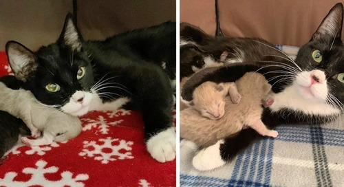 Stray Cat Came to Family for Help - When Rescue Arrived, They Found Kitten by Her Side